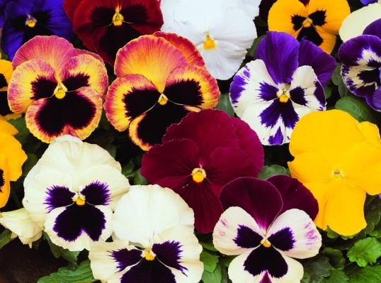 flower105